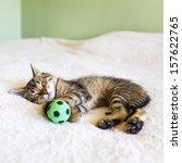 Stock photo kitten sleeping with a soccer ball 157622765