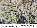 Fungus Lichen Pictogram Created ...