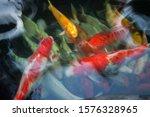 Colorful Multi Colored Fishes...
