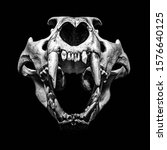 Lion Skull Photographed On Pure ...