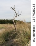 Lonely Dead Tree Surrounded By...