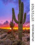 Two Saguaro Cactus At Sunset I...
