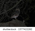 An owl at night on some branches - stock photo