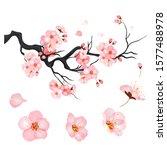 blossom cherry flowers on... | Shutterstock .eps vector #1577488978
