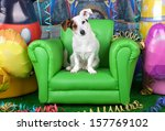 Stock photo photos of carnival with a jack russell on a green armchair 157769102