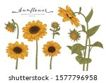 sketch floral botany collection.... | Shutterstock .eps vector #1577796958