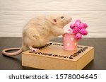 White Rat Sits On A Beautiful...