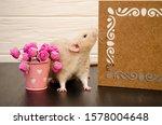 White Rat Sits Near A Beautiful ...