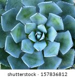 Macro Of Succulent Plant In Th...
