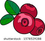 three lingonberry berries with... | Shutterstock .eps vector #1578529288