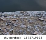 Lakeside Fallen Leaves With...