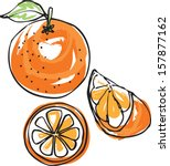 whole sliced   segment orange... | Shutterstock .eps vector #157877162