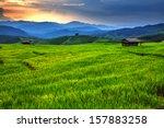 Fresh Terrace Rice Field Over...