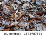 A Lone Fungi Amongst The Autumn ...