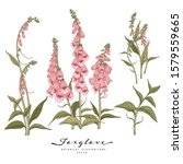 Sketch Floral Botany Collection....