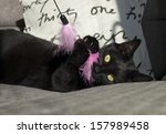 Stock photo black cat plays with pink toy 157989458