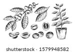 vector hand drawn black and... | Shutterstock .eps vector #1579948582