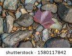 A Fallen Purplish Red Leaf...