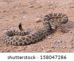 Great Basin Rattlesnake ...