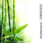 Many Bamboo Stalks And Light...