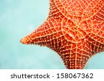 Close Up Of Red Starfish In A...