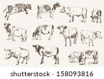 Stock vector cow animal husbandry set of vector elements 158093816