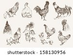 chicken breeding. set of vector ... | Shutterstock .eps vector #158130956