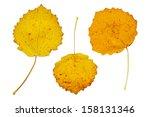 Three Yellow Autumn Leaves