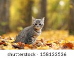Stock photo kitten in yellow leaves 158133536