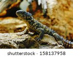 lizard on a stone | Shutterstock . vector #158137958