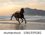 Dark Bay Horse Galloping In The ...