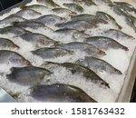 many fresh giant seaperch fish... | Shutterstock . vector #1581763432
