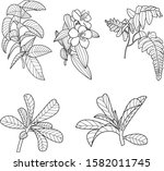 basic vector image of plants... | Shutterstock .eps vector #1582011745