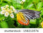 Butterfly On Flower In Public...
