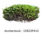 Green Bush With Roots Isolated...