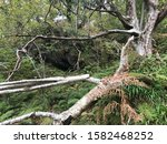 Branches And Fallen Trees In...