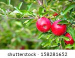 apples on the tree. apple... | Shutterstock . vector #158281652