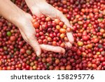 Close Up Red Berries Coffee...