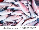 fresh mackerel fish at the... | Shutterstock . vector #1583290582