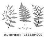 fern leaf vector set. botanical ... | Shutterstock .eps vector #1583384002