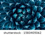 Closeup Agave Cactus  Abstract...