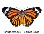 Stock photo monarch butterfly isolated on white background 158358335