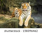 tigers are in the nature of the ... | Shutterstock . vector #158396462