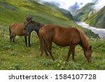 Grazing Horses Near Ralam...