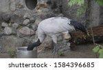 japanese crane eats food from a ... | Shutterstock . vector #1584396685