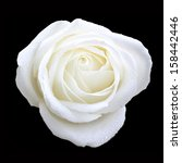 Bird Eye View Of White Rose On...