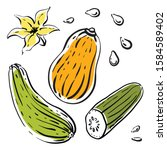 squash  courgette  cucumber ... | Shutterstock .eps vector #1584589402