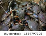 Crabs In Large Bin In Seafood...