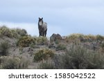 Wild Horse  Standing On A Hill...