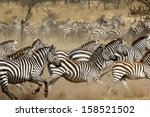 a herd of common zebras  equus... | Shutterstock . vector #158521502